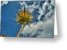 Thistle And Sky Greeting Card