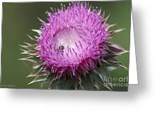Thistle And The Bee Greeting Card
