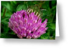 Thistle Beauty Greeting Card