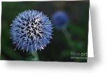 Thistle Bloom 2 Greeting Card