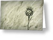 Thistle - Dreamers Garden Series Greeting Card