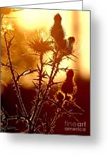 Thistle Edge Glow Greeting Card
