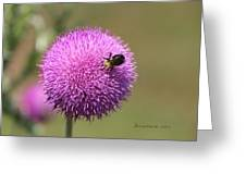 Thistle And A Bee Greeting Card