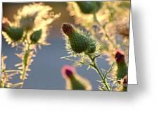 Thistle Garden Greeting Card