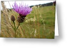 Thistle In A Swiss Field Greeting Card