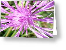 Thistle In Umbria Greeting Card