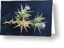 Thistle Of Israel Greeting Card