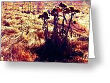 Thistles In A Summer Field Greeting Card