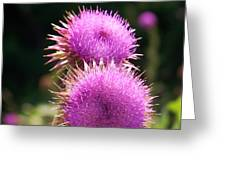 Thistles In Love Greeting Card