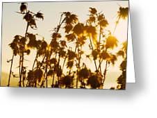 Thistles In The Sunset Greeting Card