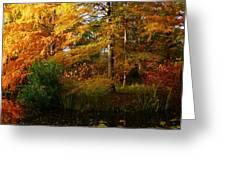 Thoreau's Splendour Greeting Card
