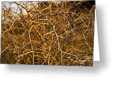 Thorn Bush Greeting Card