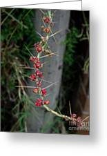 Thorns And Blooms Greeting Card