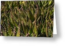 Thorns On Succulent Greeting Card