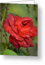 Thorny Red Rose Greeting Card