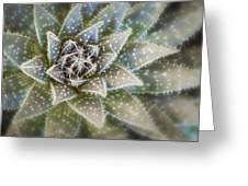 Thorny Succulent Greeting Card