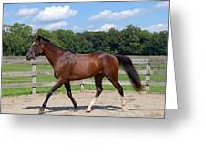 Thoroughbred Day Greeting Card