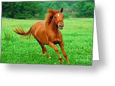 Thoroughbred Filly Greeting Card