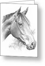 Thoroughbred Pencil Portrait Greeting Card