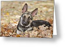 Those Ears Greeting Card