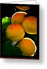 Those Glowing Golden Apricots Greeting Card by Susanne Still