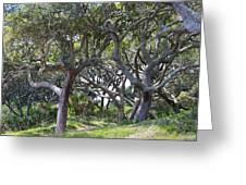 Jekyll Island Beach Path Greeting Card by Ella Char