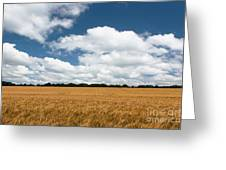 Thoughts Of A Wheatfield Greeting Card