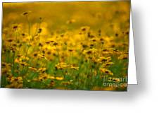 Thoughts Of Spring Greeting Card