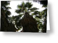 Thousand Palms Canyon Greeting Card