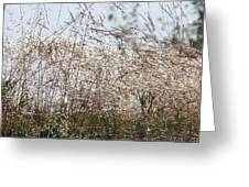 Thousands Of Shimmering Raindrops Greeting Card
