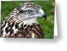 The Threat Of A Predator Hawk Greeting Card