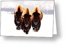 Three Amigos Greeting Card