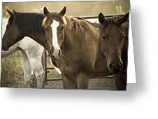 Three Amigos Greeting Card by Steven Bateson