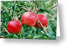 Three Apples On Tree Greeting Card