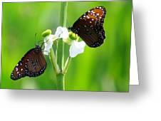 Three Beauties Greeting Card