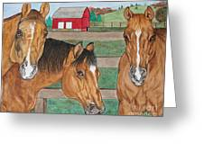 Three Beautiful Horses Greeting Card