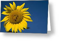 Three Bees And A Sunflower Greeting Card