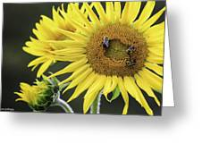 Three Bees On A Sunflower Greeting Card
