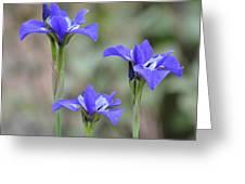 Three Blue Iris Greeting Card