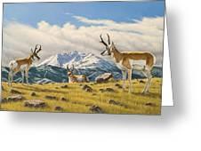 Three Bucks On The Ridge Greeting Card