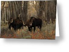 Three Bull Moose Sparring Greeting Card