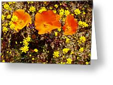 Three California Poppies Among Goldfields In Antelope Valley California Poppy Reserve Greeting Card