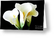 Three Calla Lilies On Black Greeting Card