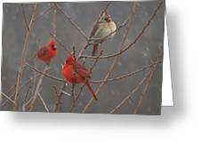 Three Cardinals Greeting Card