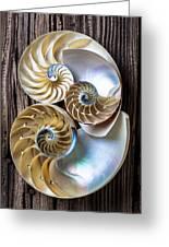 Three Chambered Nautilus Greeting Card by Garry Gay