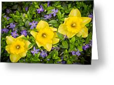 Three Daffodils In Blooming Periwinkle Greeting Card