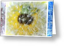 Three Dandelions In A Line Greeting Card