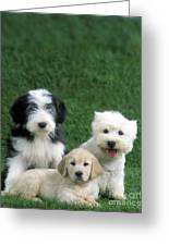Three Diffferent Puppies Greeting Card