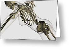 Three Dimensional View Of Female Spine Greeting Card by Stocktrek Images