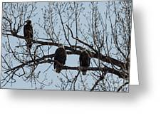 Three Eagles In Tree Greeting Card